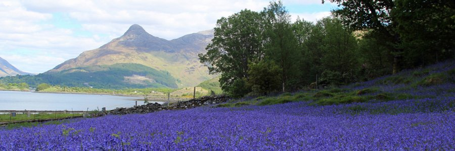 Bluebells at St John's Church Glencoe