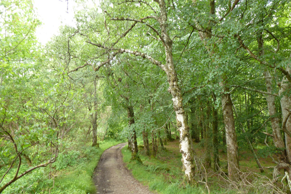 The start of the track to Larachmhor Gardens