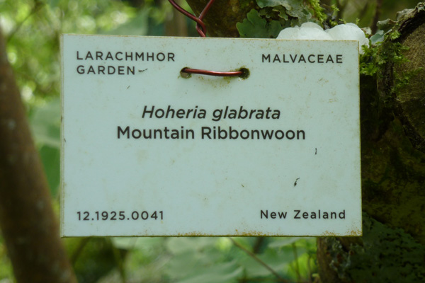 Many of the specimen plants are labelled