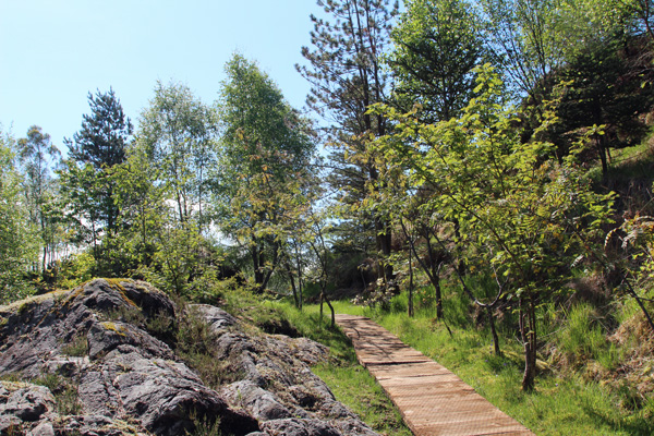 One of the many paths through Ard Daraich gardens