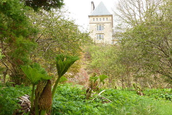 Ardtornish House with Gunnera manicata in the foreground