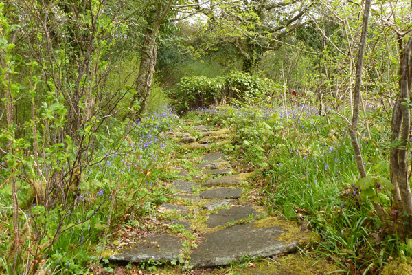 One of the many winding paths through Ardtornish Gardens