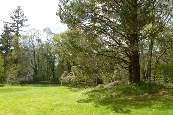 A view from within Ardtornish Gardens