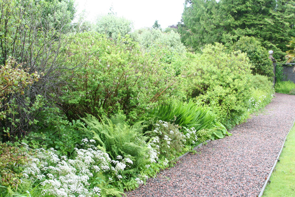 Herbaceous border in Glenborrodale Castle Gardens