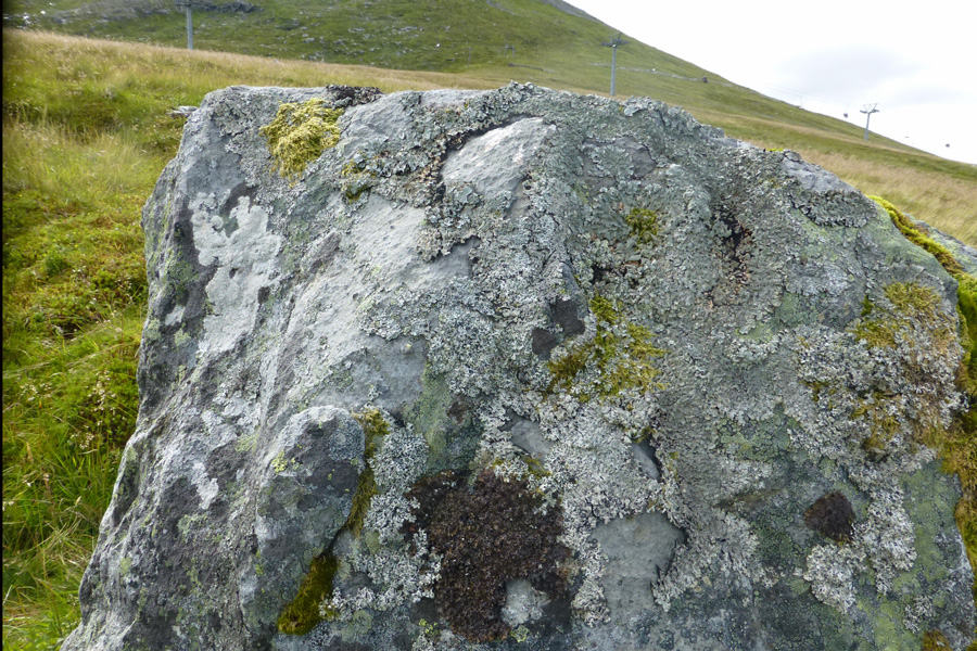 A rock covered in lichens - take time to explore the willdife of The Nevis Range