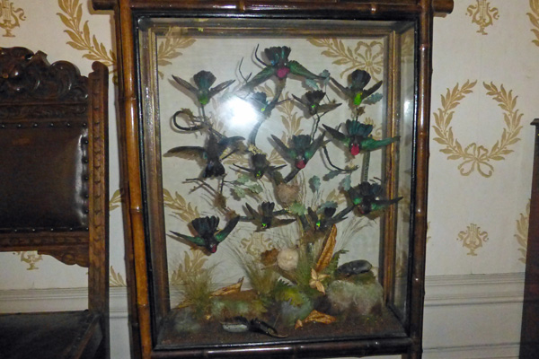 A collection of stuffed hummingbirds from Kinloch Castle