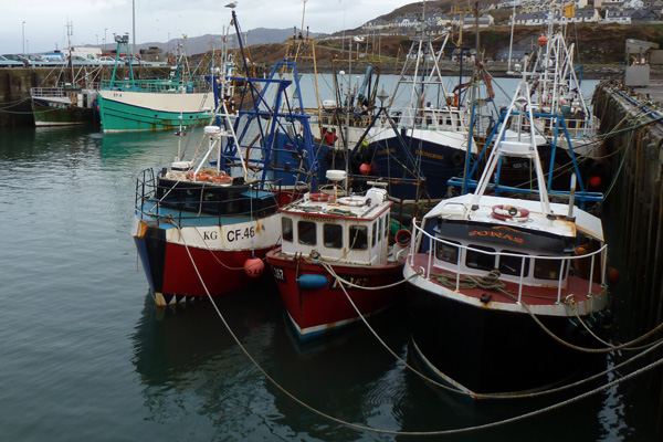The Fishing Fleet at Mallaig
