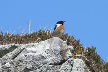 Stone chat