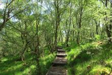 Boardwalk through Shian Wood SWT Nature Reserve
