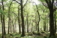 Ariundle Oakwoods near Strontian