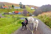 Dochar Aile - Highland Sled Dog Tours