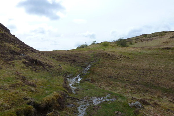 grassy path heading towards the fallen beech tree