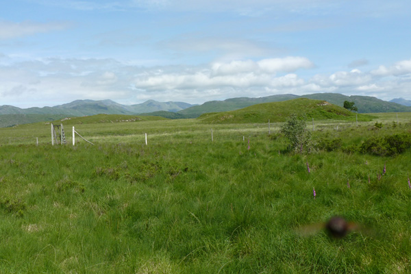 The fence and deer gate at Claish Moss