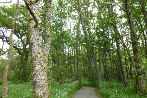Passing through ancient alder woodlands on your return following the Alt Dubh Trail