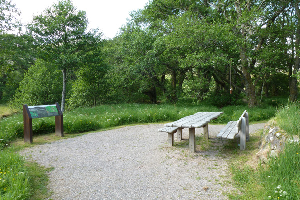 Picnic bench and interpretation board on the Alder Trail
