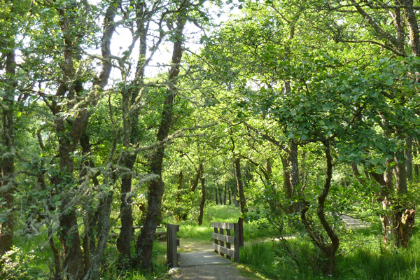 Lovely walk through alder woodlands on the Alder Trail