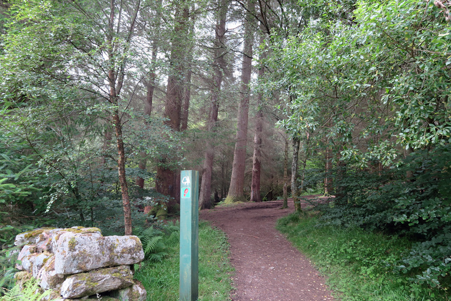 The path passes by an old graveyard and some lovely mature coniferous plantation