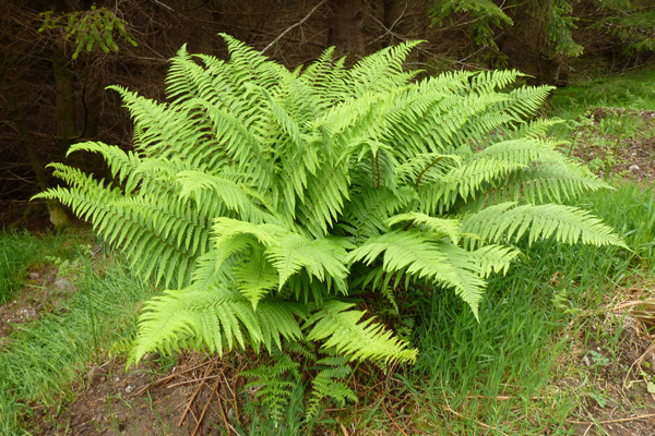 One of the many lovely ferns on the track edge