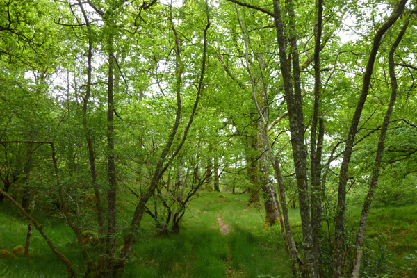 The path through the old woodlands