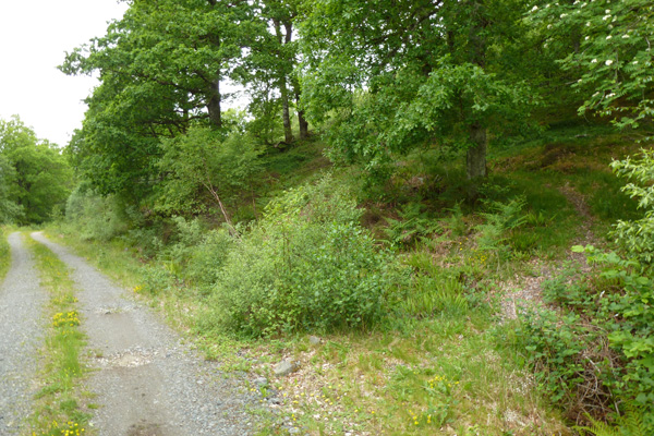 Look out for the small gravel path on the right up into the oak woodlands