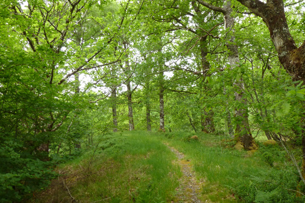 The path continues through the woodland as it descends back to the forest track