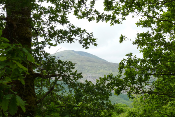 Lovely views through the woodlands to Sron Liath