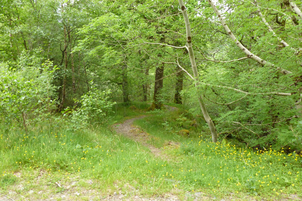 Look out for the path descending into the woodlands after you return to the forest track