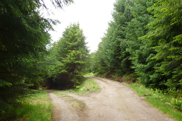 Keep right at the second junction on the forest track