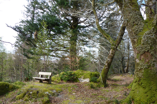 The Strontian community woodlands