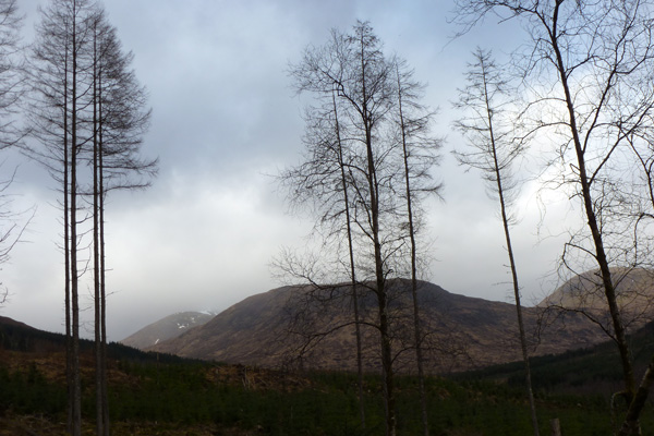 view to Meall Onfhaidh on the yellow walk