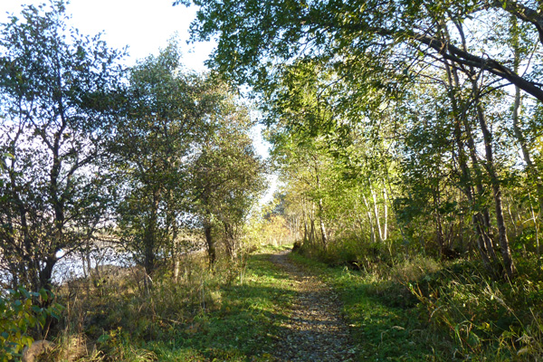 The woodland path by River Lochy