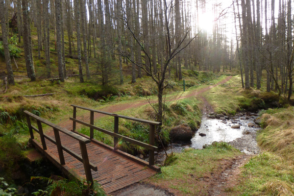 One of the many stream crossings in Glen Righ Wood
