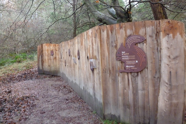Red squirrel feeding station and hide, Glen Righ Wood
