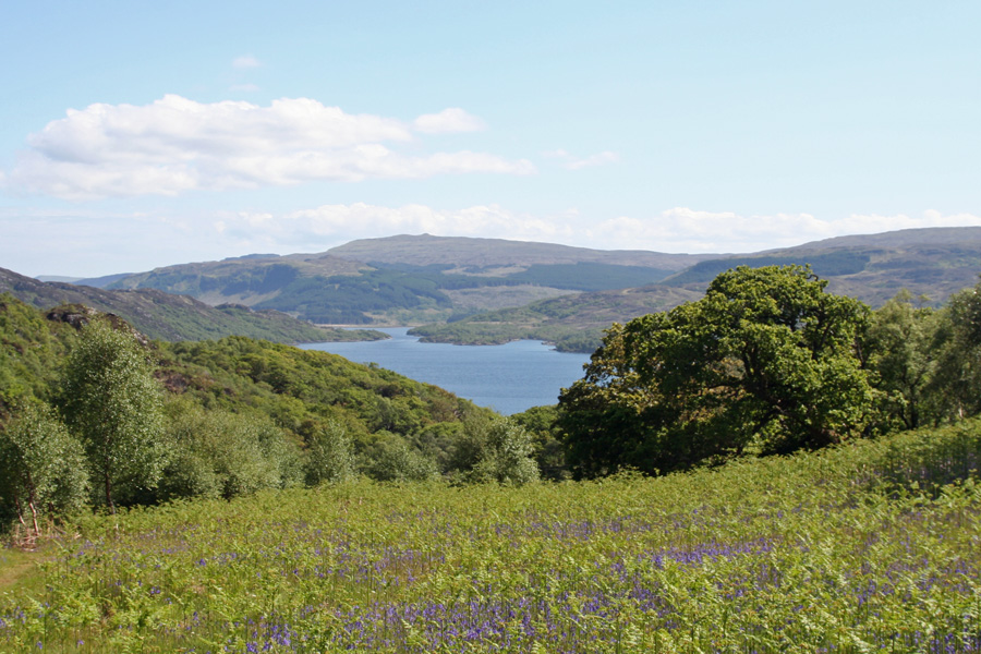Eastwards over Loch Sunart - bluebells, an ancient woodland indicator species
