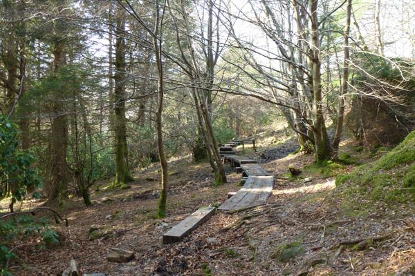 The Woodland walk near Glenfinnan Station