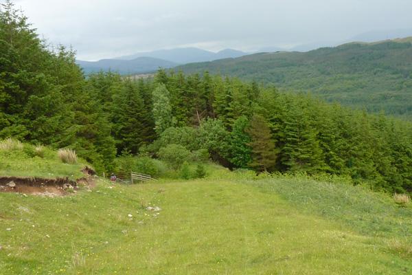The rough grassland/heath at end of walk affording fine views of the Nevis Range