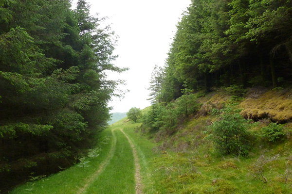 The track through the plantation towards the viewpoint at the end of the walk