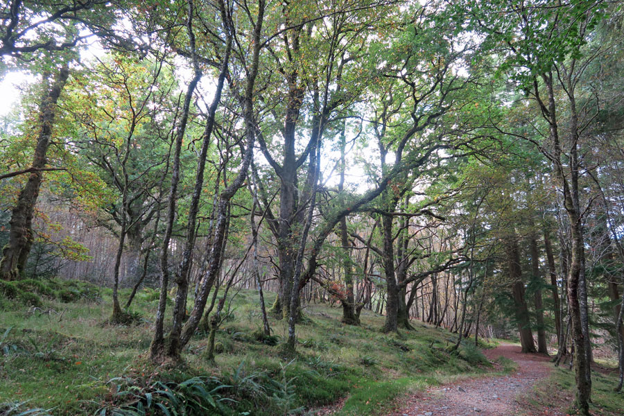 Killiechonate Woodland Walk