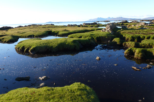 The nearby salt marsh with its deep channels and pools