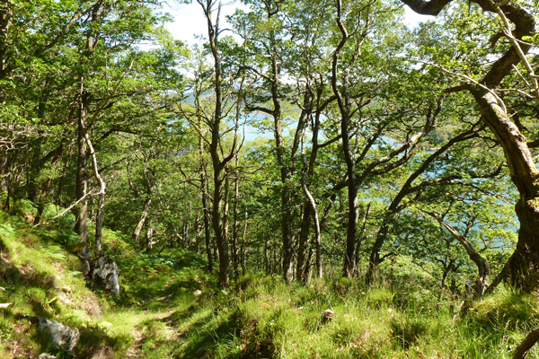 The old kinlochmoidart path