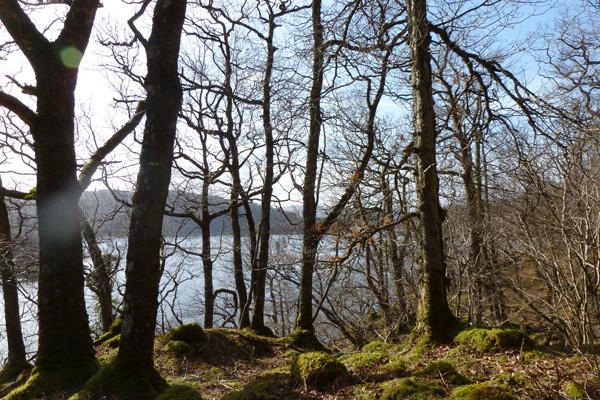 Atlantic oak woodlands make this walk really special
