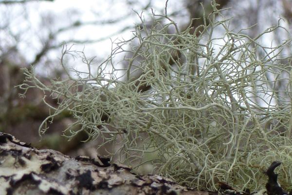 Take time to admire the lichens