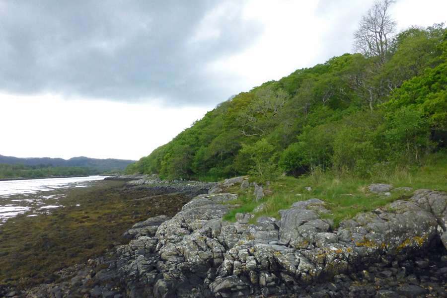 Atlantic oak woodland on the north shore of Loch Teacuis