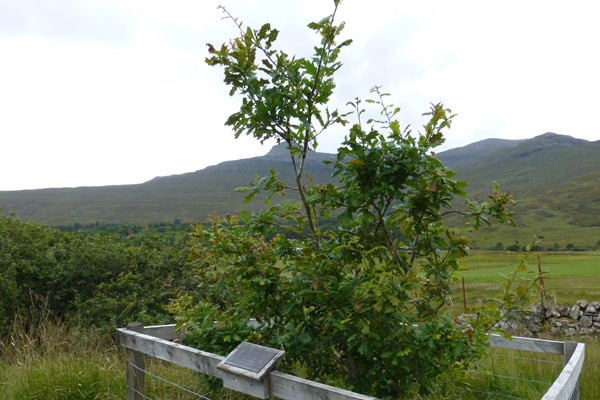 The Millionth Tree, a celebration of forty years of Rum's National Nature Reserve status