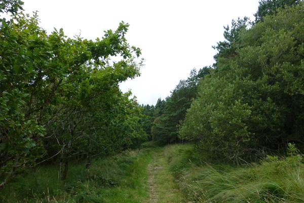 Walking through the woodland fringe