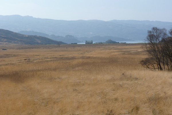 The reed beds behind the bothy at Peanmeanach