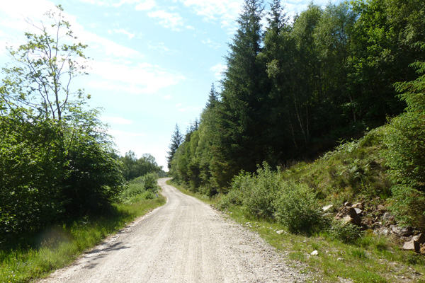 The forest track from Polloch to Loch Shiel