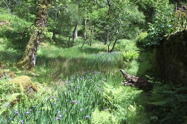 The walled garden - blue iris