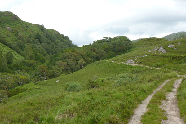 The track runs along side an increasingly steeply sided wooded valley