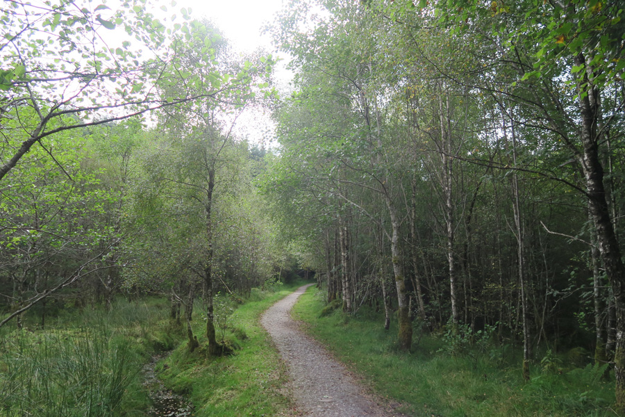 The path continues through woodland after crossing The River Lundy